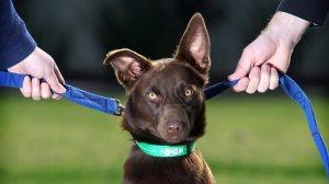 dog custody picture