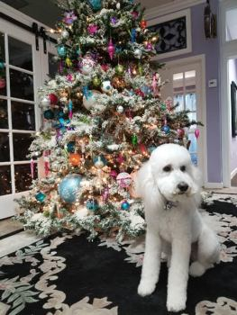 Rancho Cucamonga Family Law Office Dog on Christmas